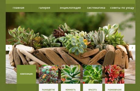 "Succulent site <em>(Typo3)</em> <a href=""http://www.succulent.com.ua/"">http://www.succulent.com.ua/</a>"