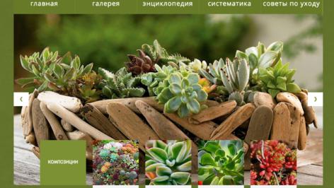 succulent 472x266 succulent